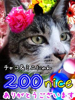 200ナイスm_200niceE38182E3828AE3818CE381A8E38186.jpg