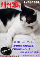kontenten6000nice記念so-net6101109.9.11.jpg