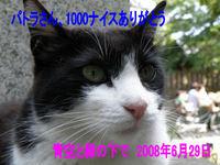 1000_080629-e9278 ナイス.jpg