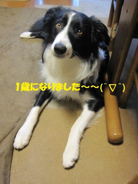2012-06-22 1歳誕生日のアルファ 008.jpg-1.jpg