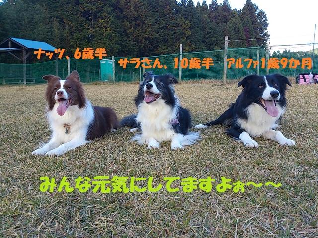 DSC_0095.jpg-1.jpg