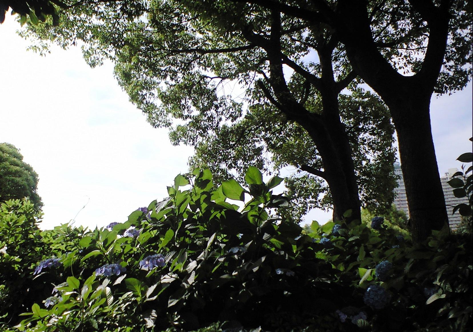 20090612_01_幕張.JPG