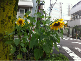 image-20140711184032.png