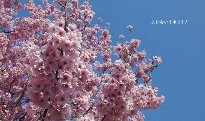 1104sakura01.jpg