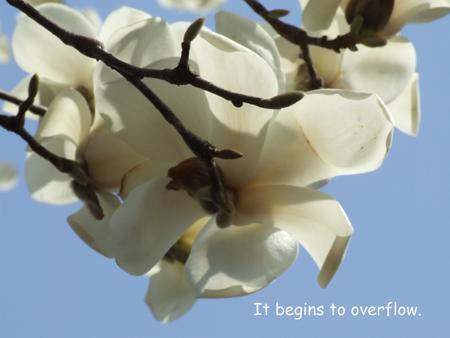 開いてあとは花びらが散るのを待ってる?でも、もう少しこのままでいて欲しい。空に向かって咲く花の花弁はなんだか透けている。何かを守ってるのかな?