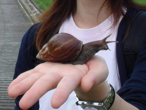 gosh huge snail play