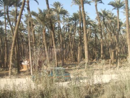 エジプト旅行 399.jpg