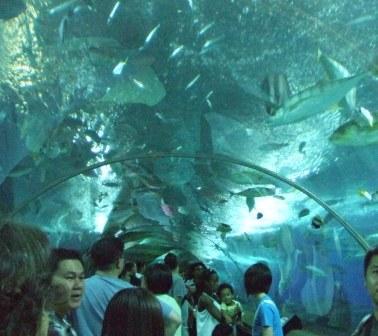 シンガポール旅行 097.jpg