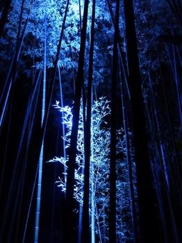 竹林1.jpg