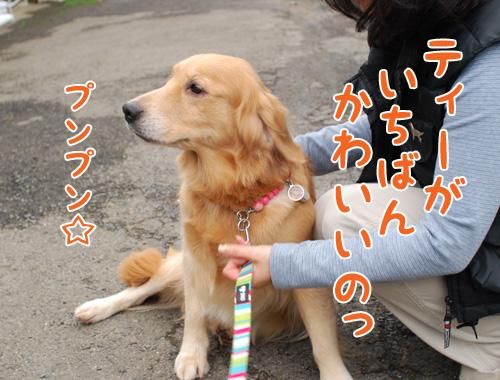 ティアラちゃん.jpg