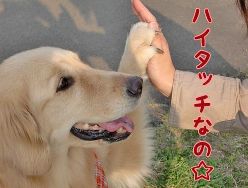 ハイタッチなの☆.jpg
