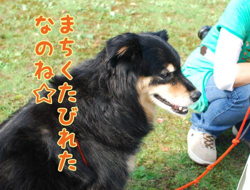 Hanaちゃん.jpg