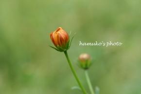 hamuko's photo
