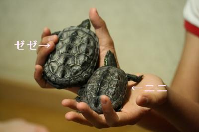 ゼゼ&ニニ 大きさ比較