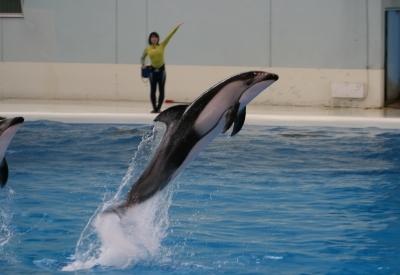イルカじゃーーーーんぷ♪