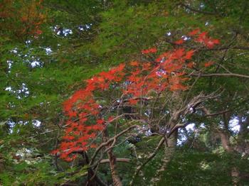 20101120紅葉.jpg