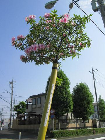 002-120507-tsutsuji480.jpg