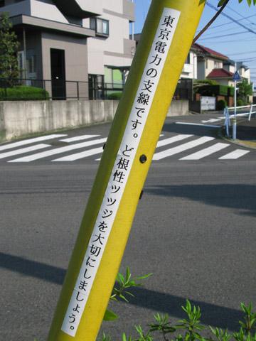 003-120507-tsutsuji480.jpg