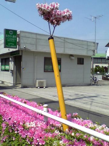 004-050509-tsutsuji480.jpg