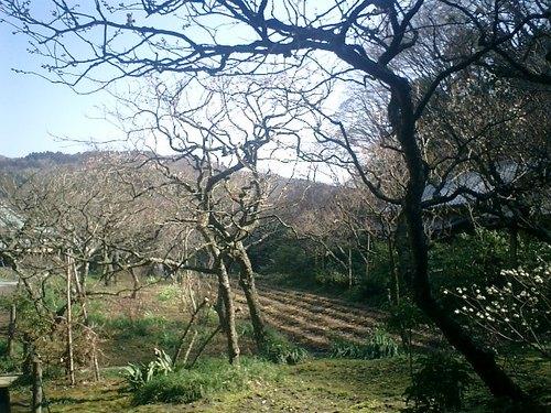 27)東慶寺、境内庭園.jpg