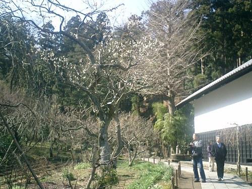 28)東慶寺、墓苑方向の山を観る.jpg