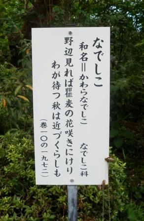 00 11.07.07 -01  国分寺 31 bb.jpg