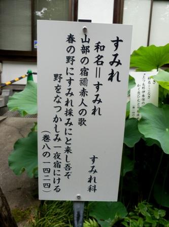 00 11.07.07 -01  国分寺 34.jpg