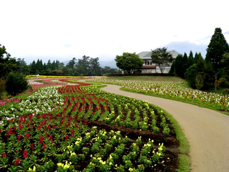 10.10.13-159  花公園9.jpg