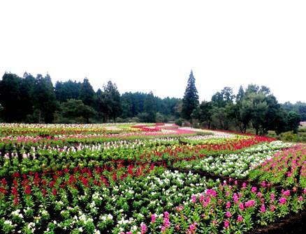 10.10.13-160  花公園10.jpg