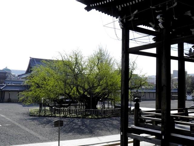 A13.04.05-11  西本願寺19.jpg