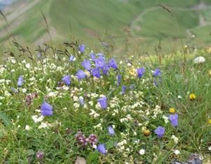 ロートホルン山頂3.jpg