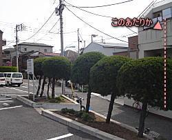 セメントの坪2008.jpg