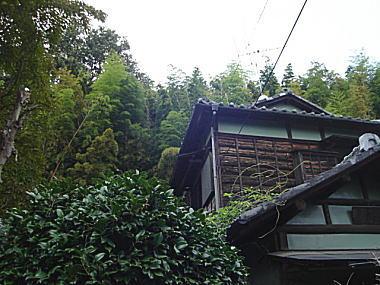 ハケの道1.JPG