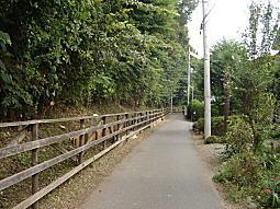 ハケの道2.JPG