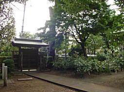 ハケの道5.JPG