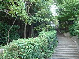 ハケの道7.JPG