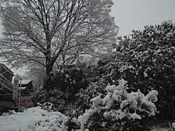 下落合雪中20130114.JPG