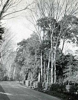 五日市街道1955頃.jpg