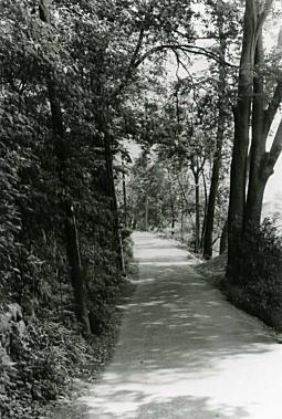 小金井ハケの道2_1974.jpg