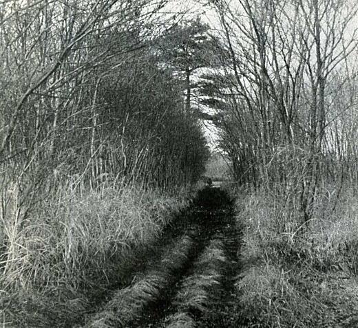 小金井ハケ下の道1955頃.jpg