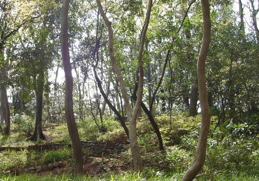 御留山雑木林.jpg