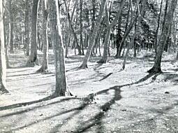 深大寺近く1955頃.jpg