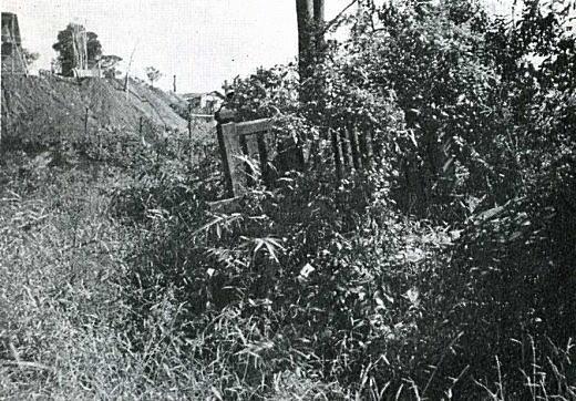 藤稲荷1955.jpg