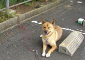 9.14テトラ犬.jpg