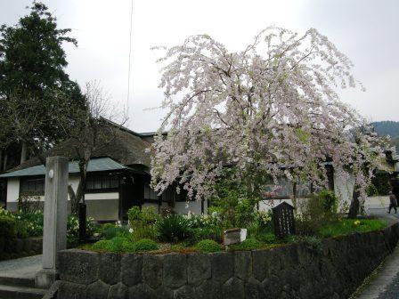 桜のお屋敷