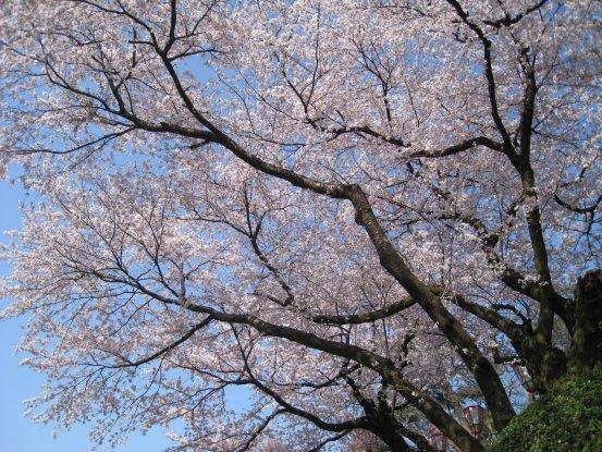 2009_0411_kanazawa (2).JPG