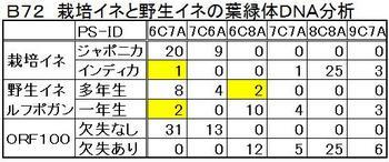B72 葉緑体DNA.jpg