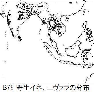 B75 nivara分布.jpg