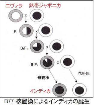 B77インディカ誕生.jpg