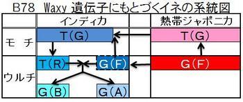 B781イネ系統図.jpg